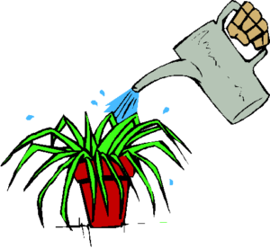 watering-a-plant